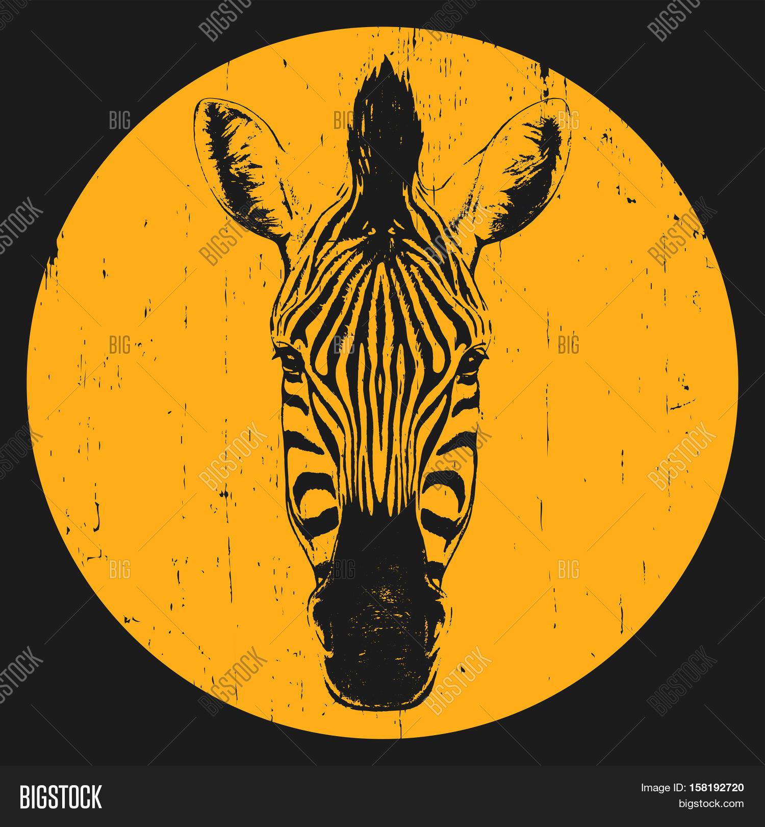 Zebra shirt design - Portrait Of Zebra Hand Drawn Illustration T Shirt Design Vector