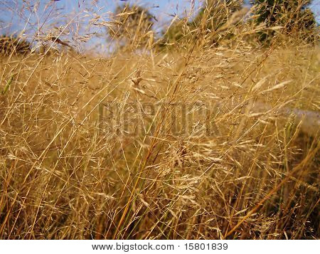 Dried grass.