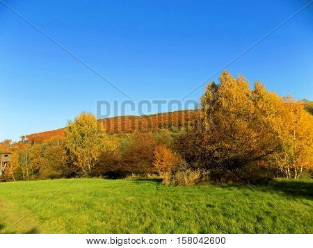 Meadow and colorful deciduous forest during autumn