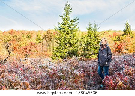 Young woman walking through frost iced trail path of blueberry bushes illuminated by morning sunlight at Dolly Sods, West Virginia