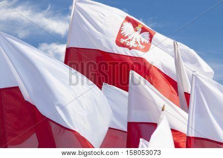 Multiple Polish flags flying against the sky sunlit demonstration