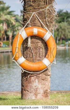 Orange life buoy hanging on tree nearby the lake for safety and rescue.