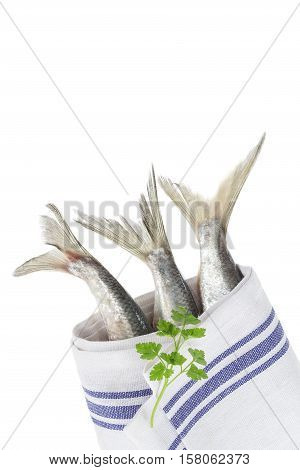 tail of a fish herring on white background