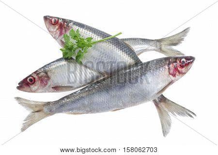 Fresh fish herring isolated on white background