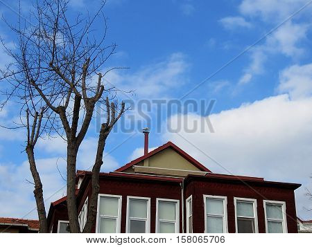 Tree and a hundred years old structure.A gull on the roof.
