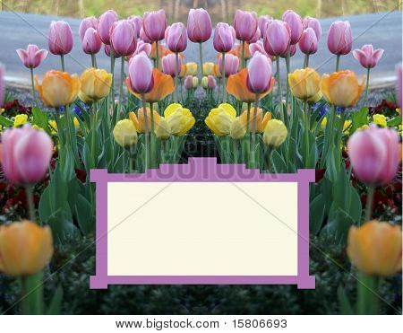 Sign Surrounded with Tulips