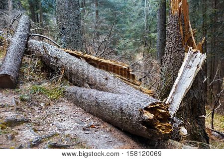 Felled tree trunks in the High Tatras mountains.