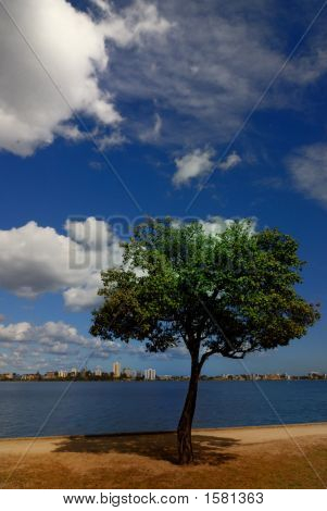 trees blue skies Swan River Perth