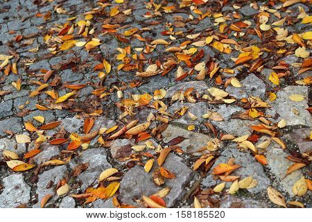 Texture of road paved with stones and bright autumn leaves