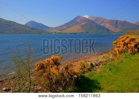 Loch Leven Lochaber Geopark Scotland uk view to Glen coe with snow topped mountains and yellow flowers and just off B863 south of Ben Nevis