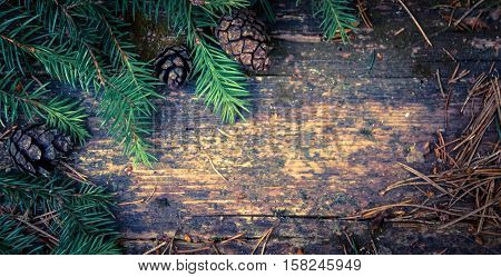 spruce branch green and three black small-sized lumps lie on a wooden table surface, jagged weather, old, in the woods outside, processed preset, emerald hue,
