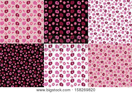 Six seamless floral pattern with cosmos and verbena flowers. Vector set. Print for fabric.