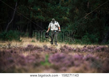 Forester Spreading Food For Red Deer In Rutting Season. National Park Hoge Veluwe.