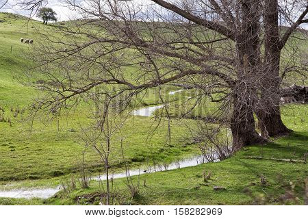 Trees And Small Creek