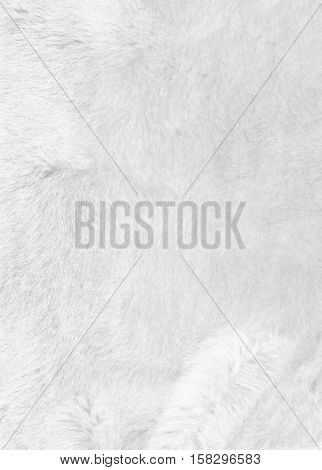 White smooth luxury fur background texture. Closeup