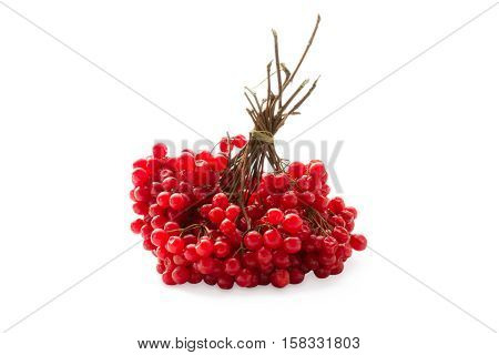 Viburnum (viburnum opulus) berries isolated on white background