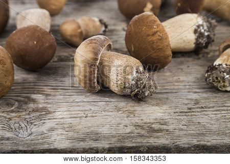 Raw Mushrooms On A Wooden Table. Boletus Edulis And Chanterelles.