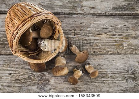 Raw Mushrooms Pour Out Of The Basket On Old Wooden Table. Boletus Edulis.