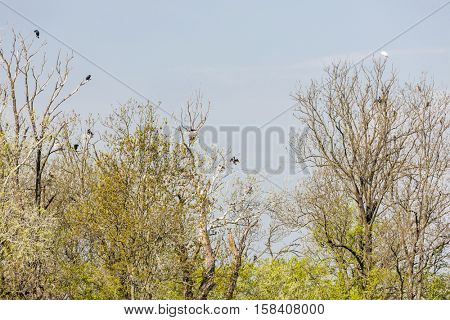 birds on trees