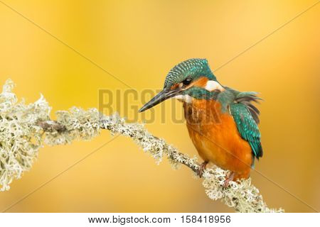 Kingfisher perched on a branch in its natural habitat