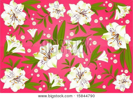 Beautiful set of lilies on the pink background.