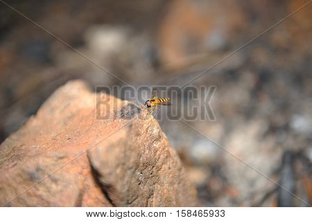 frozen moment of hover fly in flight background