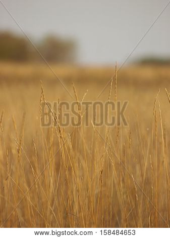 Close-up of  grass tending a breath of wind
