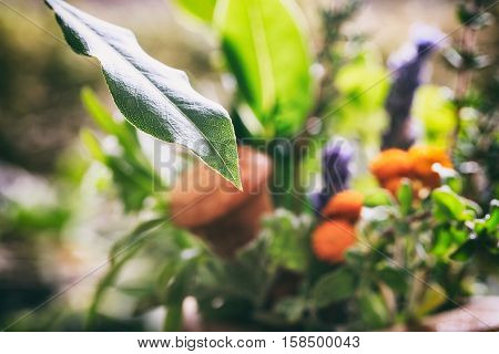 Green Leaf And Variety Of Fresh Herbs