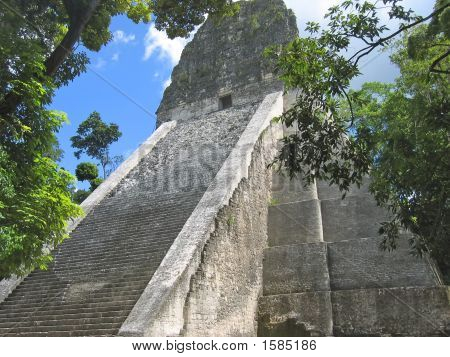 Main Building Of Old Maya Ruins With Some Jungle Tree, Tikal, Guatemala