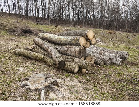Timber harvesting. Pile of logs and lots of stumps in the wood-cutting area in the forest in early spring.