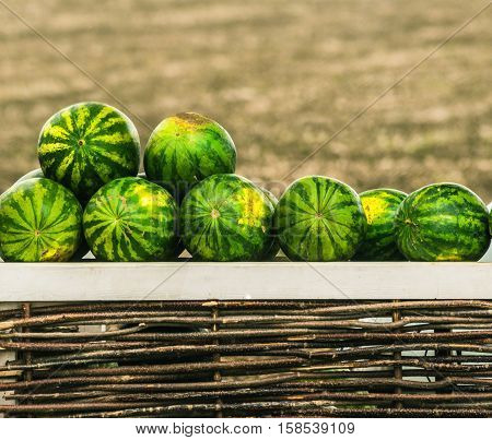 watermelons at market close up watermelons heap