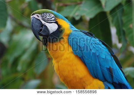 Pretty profile view of a blue and gold macaw.