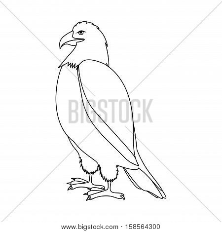 contour eagle in standing position vector illustration