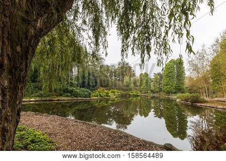 Scenic view over a pond in a botanical garden called De Braak in Amstelveen (Netherlands) framed by a babylon weeping willow