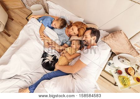 In parent arms. Top view of cat and family of four under blanket on white bed. They embracing each other