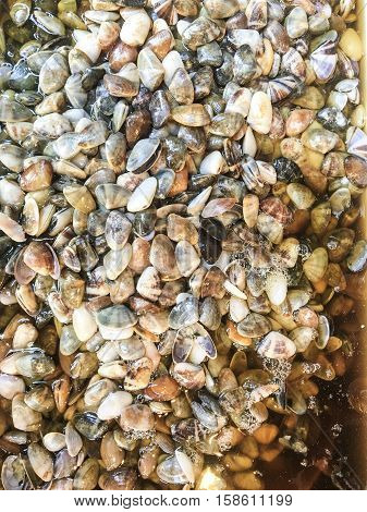 shell in fish sauce is a one of thai favorite food. the shell pickled style in fish sauce have a good taste with salty and sweet. preserved razor clam ready for sale in market