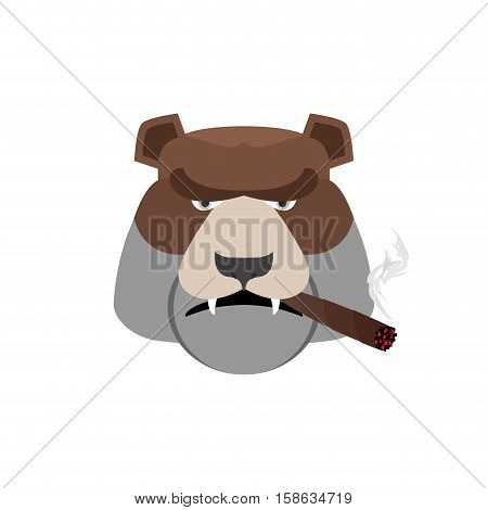 Angry Bear With Cigar. Aggressive Grizzly Isolated