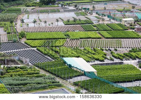 Aerial view plantations near gravel river Torrento Mazzarra at Sicilian Island