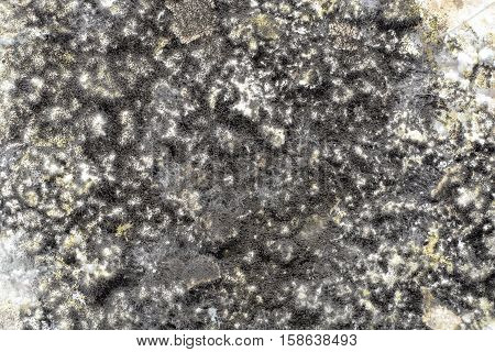 black mold on foods. background abstraction mold