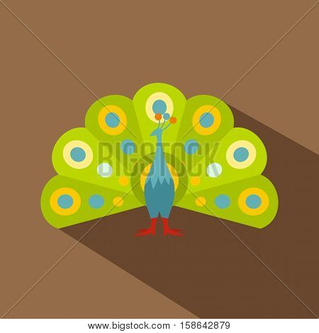 Colorful peacock icon. Flat illustration of colorful peacock vector icon for web isolated on coffee background