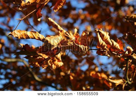 Golden wilted autumn leaves against a blue sky