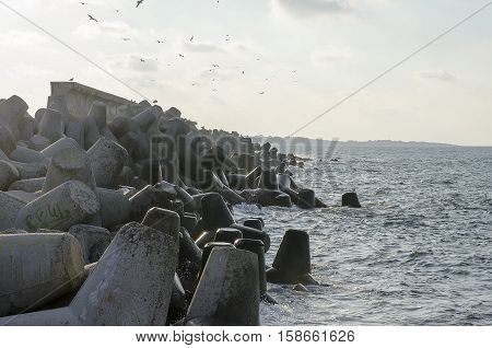 Rocks of the Black Sea and birds