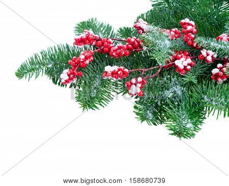 twig with red berries and green evergreen tree twig isolated on white background