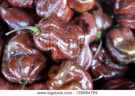 Spicy Hot Ghost Peppers at the Farmer's Market