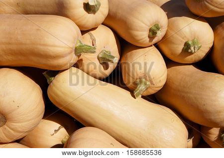 A Stack of Butternut Squash at the Farmer's Market