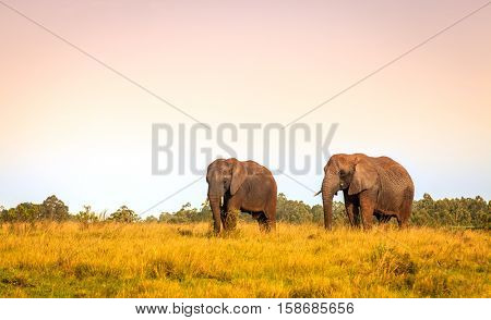 Young rescued elephants in Knysna Elephant Park, South Africa