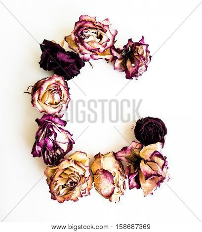 Rose dried Initials letter C.