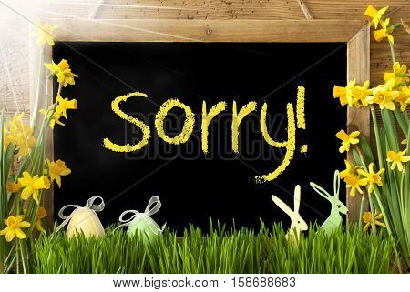 Blackboard With Yellow English Text Sorry. Sunny Spring Flowers Nacissus Or Daffodil With Grass, Easter Egg And Bunny. Rustic Aged Wooden Background.