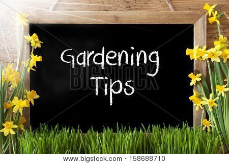Blackboard With English Text Gardening Tips. Sunny Spring Flowers Nacissus Or Daffodil With Grass. Rustic Aged Wooden Background.