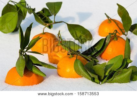 Tangerines with branches lying in the snow. Tangerine is a symbol of the Chinese New Year.